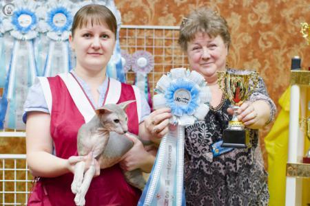 cats-show-wcf-22-02-15-spb-www greyclaws ru-226